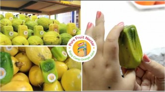 De vrais fruits en forme de packaging Camp Nectar
