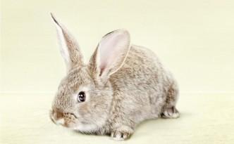 les lapins dans la publicité 5