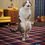 Les chats : nouvelles égéries publicitaires ?